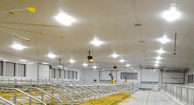 iBarn - LED Lights